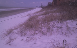 Dunes. The beach looked foreign to me.