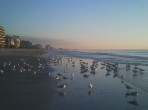 It was pretty much just me and the gang out on this stretch of sand. That's North Myrtle Beach off in the distance.