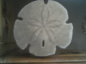 "The box is 6 inches long and 8 inches wide. That gives you a better idea how big this sand dollar is. You know what else I like about the box: there's a sticker on the bottom of it that says, ""Made in U.S.A."""