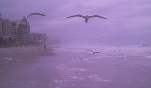 The gall of them. These seagulls were hightailing it south along the beach with the wind at their backs.
